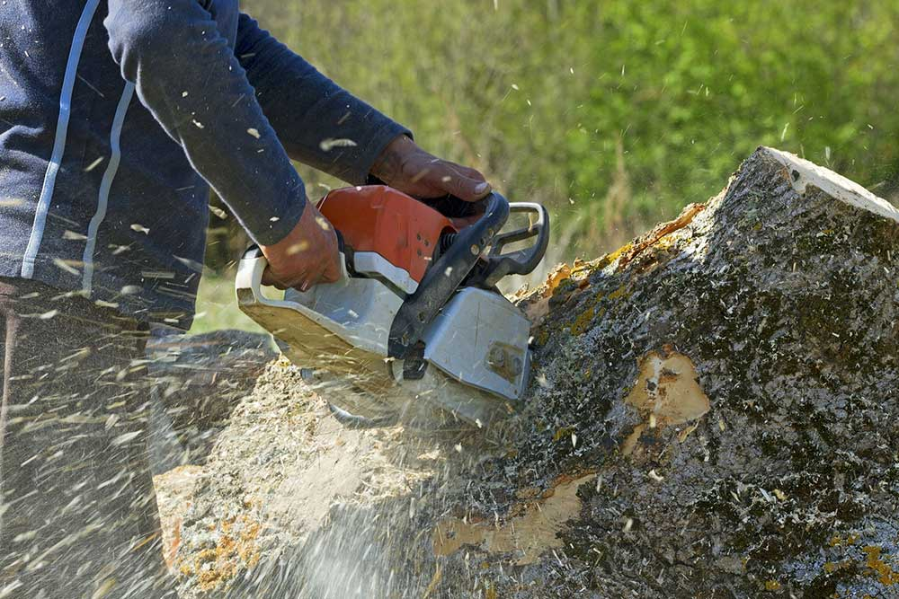 Tree Service Fort Worth - Tree Removal