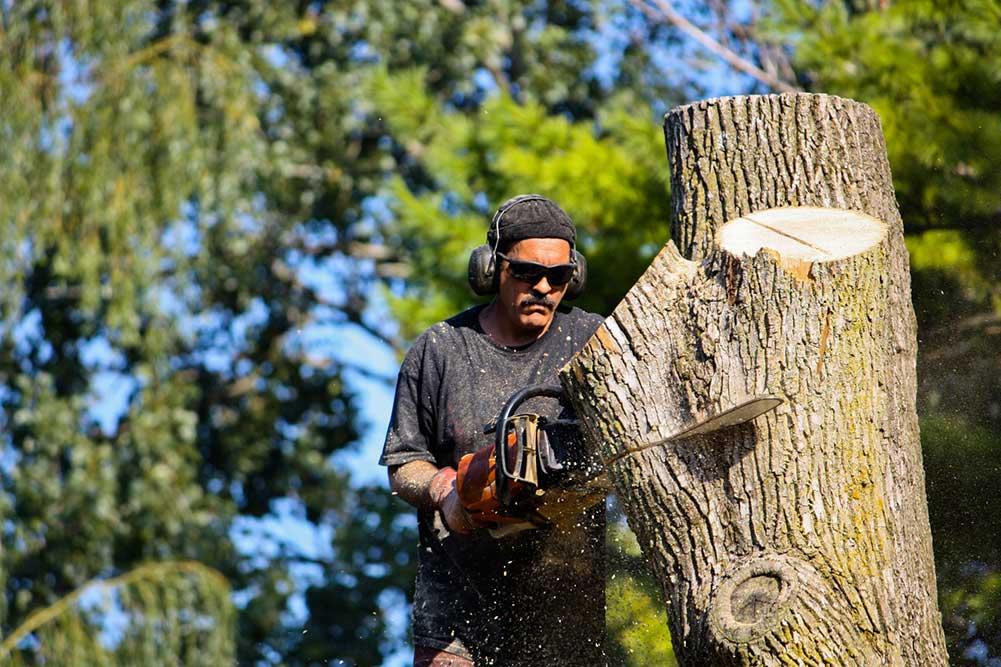 Arlington Tree Experts